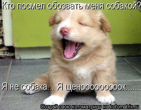Котоматрица: Кто посмел обозвать меня собакой?  Я не собака... Я щенооооооооок.......