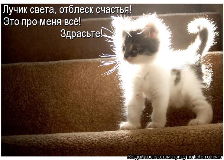 Котоматрица: Лучик света, отблеск счастья! Это про меня всё!  Здрасьте!