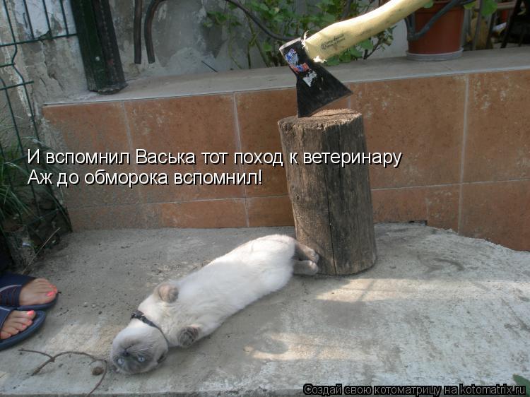 Котоматрица: И вспомнил Васька тот поход к ветеринару Аж до обморока вспомнил!