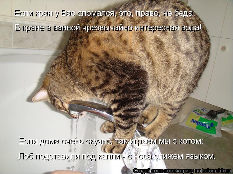 Котоматрица: В кране в ванной чрезвычайно интересная вода! Если дома очень скучно, так играем мы с котом: Лоб подставили под капли - с носа слижем языком.