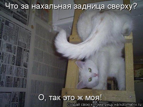 Котоматрица - Что за нахальная задница сверху?  О, так это ж моя!
