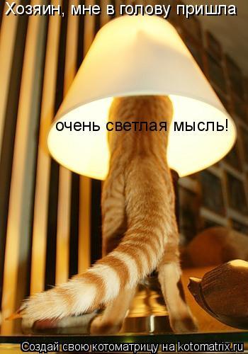 Котоматрица: Хозяин, мне в голову пришла  очень светлая мысль!