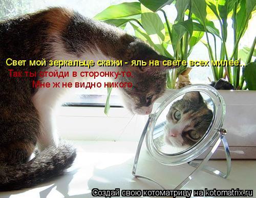 Котоматрица: Свет мой зеркальце скажи - яль на свете всех милее... Так ты отойди в сторонку-то,  Мне ж не видно никого