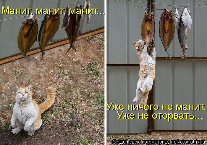 Котоматрица: Манит, манит, манит...  Уже не оторвать...  Уже ничего не манит...