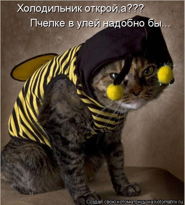 Котоматрица: Холодильник открой,а??? Пчелке в улей надобно бы...