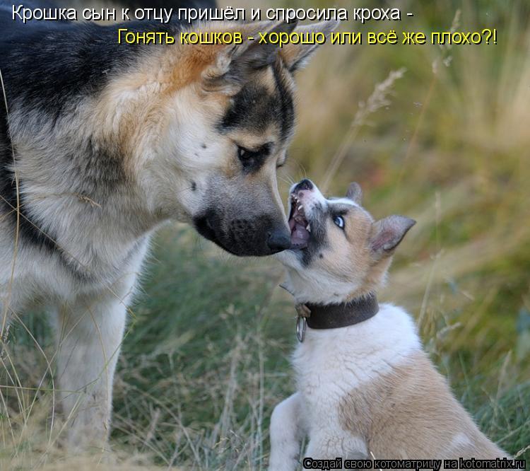 Котоматрица: Крошка сын к отцу пришёл и спросила кроха - Гонять кошков - хорошо или всё же плохо?!