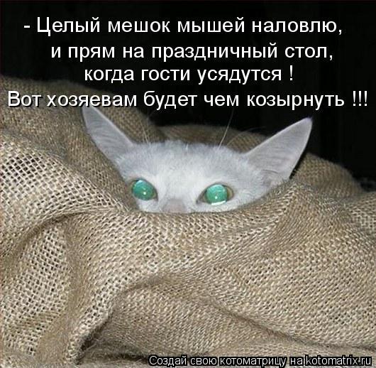Котоматрица: - Целый мешок мышей наловлю, и прям на праздничный стол, когда гости усядутся ! Вот хозяевам будет чем козырнуть !!!