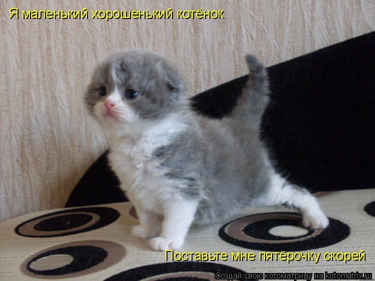 Котоматрица: Я маленький хорошенький котёнок Поставьте мне пятёрочку скорей
