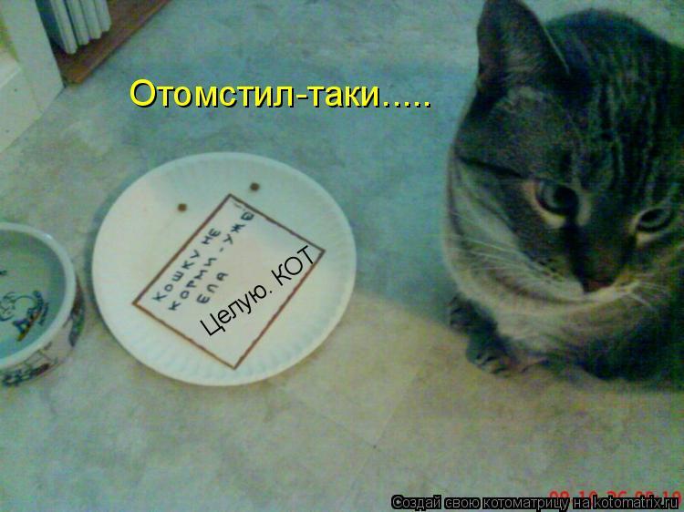 Фото целую кота