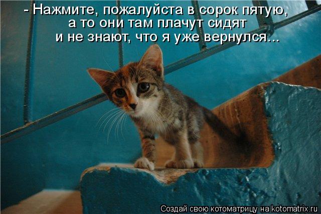Котоматрица: - Нажмите, пожалуйста в сорок пятую, а то они там плачут сидят и не знают, что я уже вернулся...