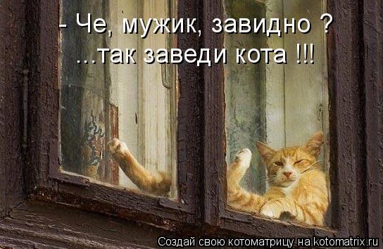 Котоматрица: - Че, мужик, завидно ? ...так заведи кота !!!