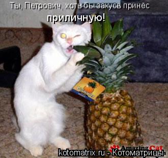 Котоматрица: Ты, Петрович, хоть бы закусь принёс приличную!