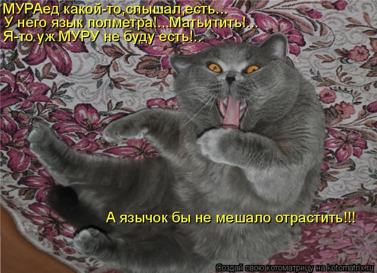 Котоматрица - МУРАед какой-то,слышал,есть...  У него язык полметра!...Матьитить!...