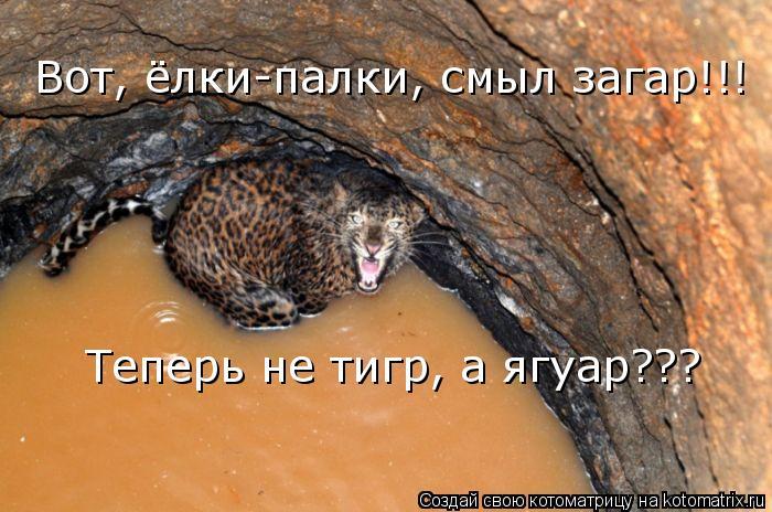Котоматрица: Вот, ёлки-палки, смыл загар!!! Теперь не тигр, а ягуар???