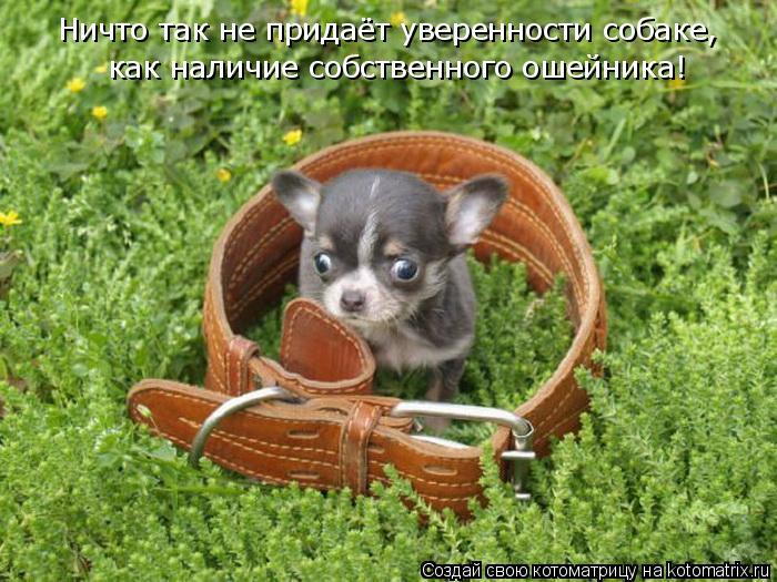 Ничто так не придаёт уверенности собаке, как наличие собственного оше