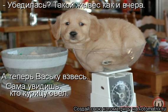 Котоматрица: - Убедилась? Такой же вес как и вчера. А теперь Ваську взвесь. Сама увидишь, кто курицу съел.