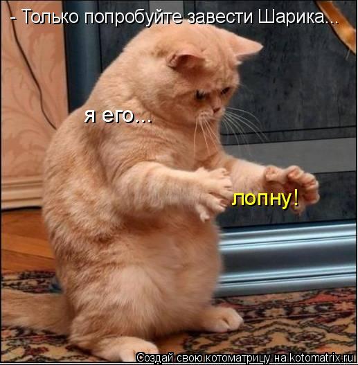 Котоматриця!)))) - Страница 4 675632