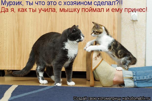 Котоматрица: Да я, как ты учила, мышку поймал и ему принес! Мурзик, ты что это с хозяином сделал?!!
