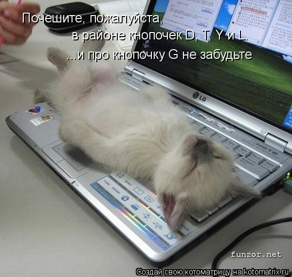 Котоматрица: Почешите, пожалуйста,  в районе кнопочек D, T, Y и L. ...и про кнопочку G не забудьте