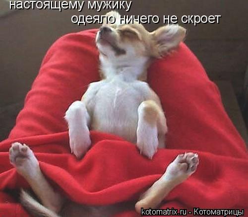 Котоматрица: настоящему мужику  одеяло ничего не скроет