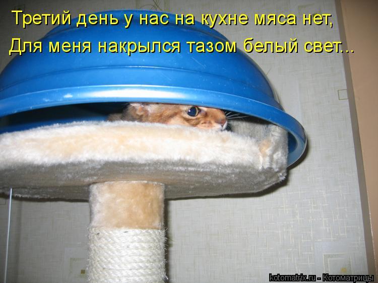 Котоматрица: Третий день у нас на кухне мяса нет, Для меня накрылся тазом белый свет...