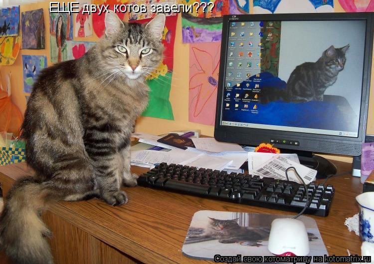 Котоматрица: ЕЩЕ двух котов завели???