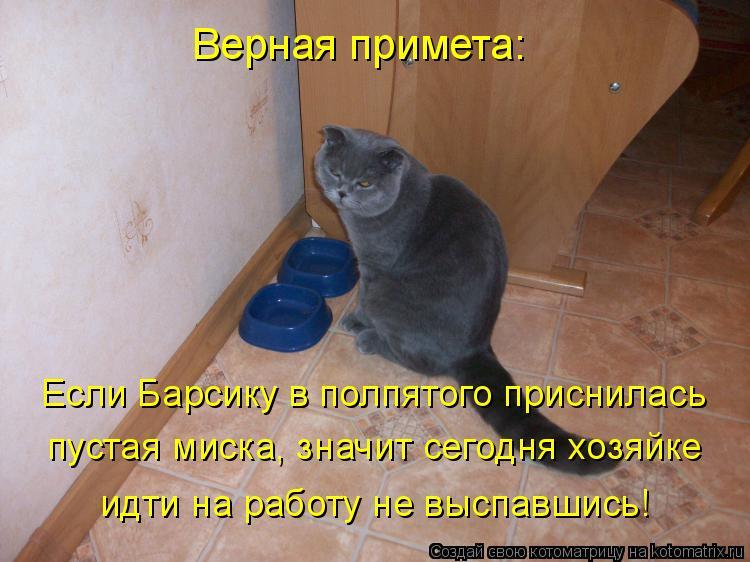 Котоматрица: Верная примета: Если Барсику в полпятого приснилась пустая миска, значит сегодня хозяйке идти на работу не выспавшись!