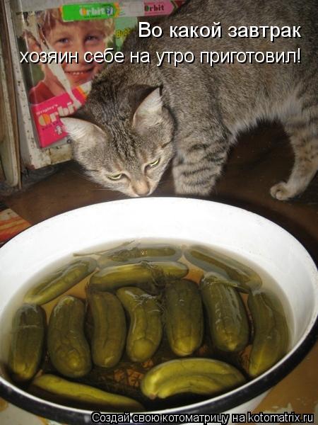 Котоматрица: Во какой завтрак  хозяин себе на утро приготовил!