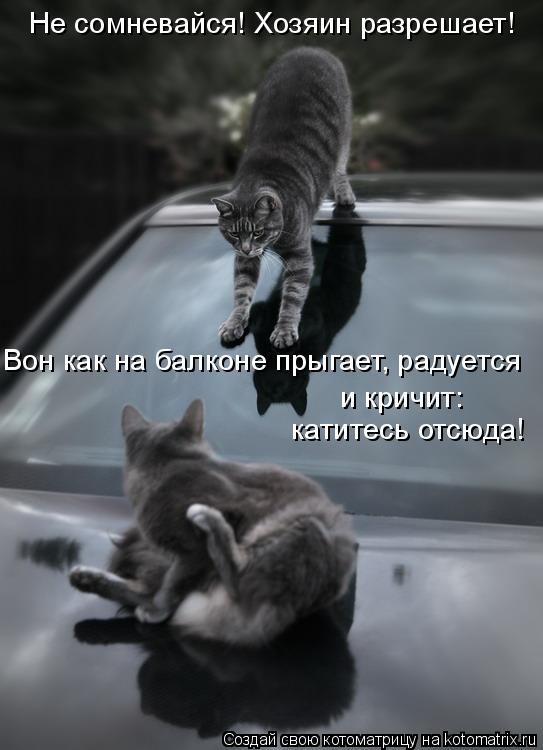 Котоматрица: катитесь отсюда! Не сомневайся! Хозяин разрешает!  Вон как на балконе прыгает, радуется  и кричит: