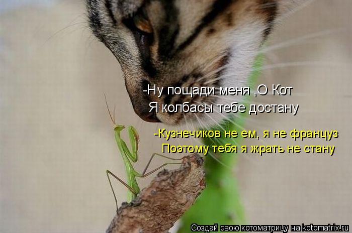 Котоматрица: -Ну пощади меня ,О Кот Я колбасы тебе достану -Кузнечиков не ем, я не француз Поэтому тебя я жрать не стану