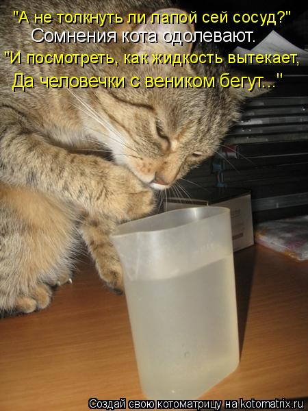 """Котоматрица: Сомнения кота одолевают. """"А не толкнуть ли лапой сей сосуд?"""" """"И посмотреть, как жидкость вытекает, Да человечки с веником бегут..."""""""