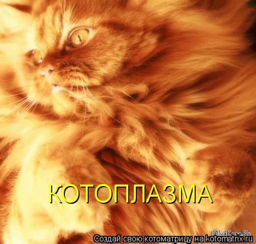 http://kotomatrix.ru/images/lolz/2010/09/11/676570.jpg