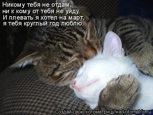 Котоматрица: Никому тебя не отдам,  ни к кому от тебя не уйду. И плевать я хотел на март,  я тебя круглый год люблю.