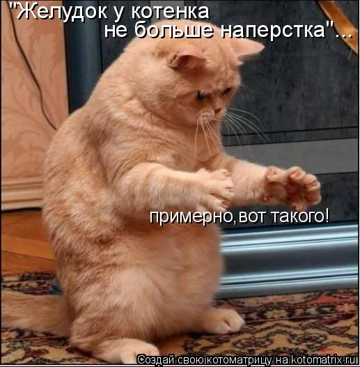 """Котоматрица: """"Желудок у котенка  не больше наперстка""""... примерно,вот такого!"""