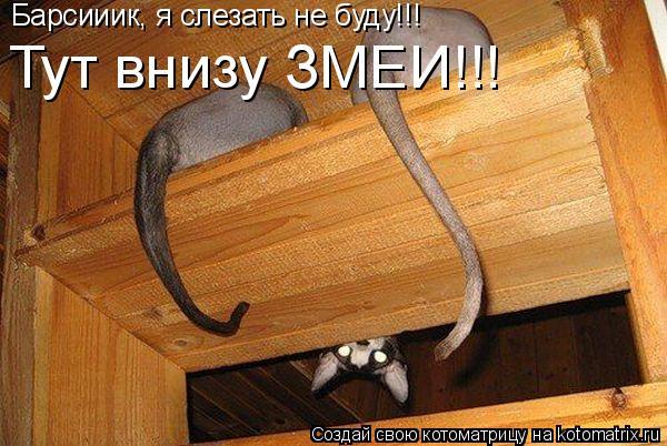 Котоматрица: Барсииик, я слезать не буду!!! Тут внизу ЗМЕИ!!!