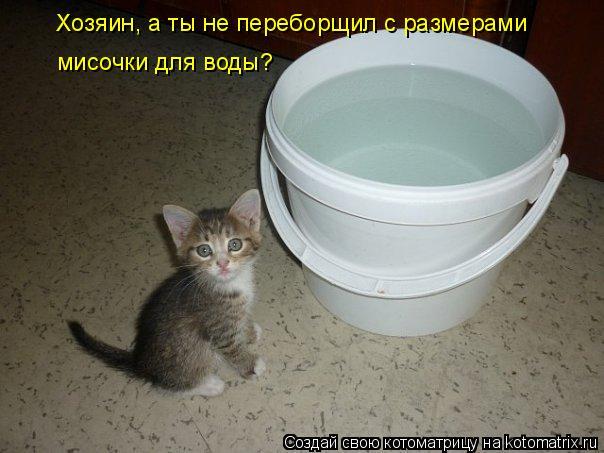 Хозяин, а ты не переборщил с размерами мисочки для воды?