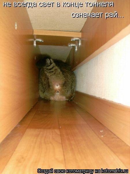 Котоматрица: не всегда свет в конце тоннеля означает рай...