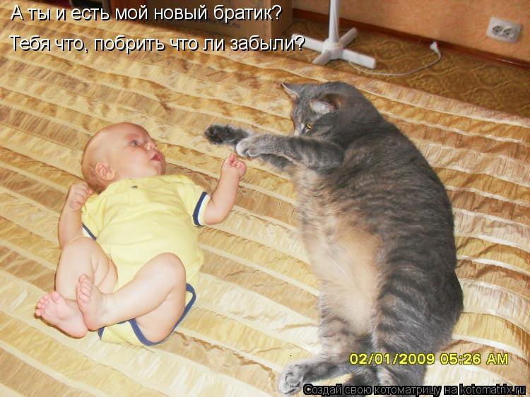 Котоматрица: А ты и есть мой новый братик? Тебя что, побрить что ли забыли?