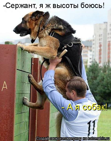 -Сержант, я ж высоты боюсь! - А я собак!