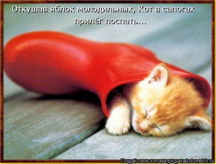 Котоматрица: Откушав яблок молодильных, Кот в сапогах прилёг поспать...