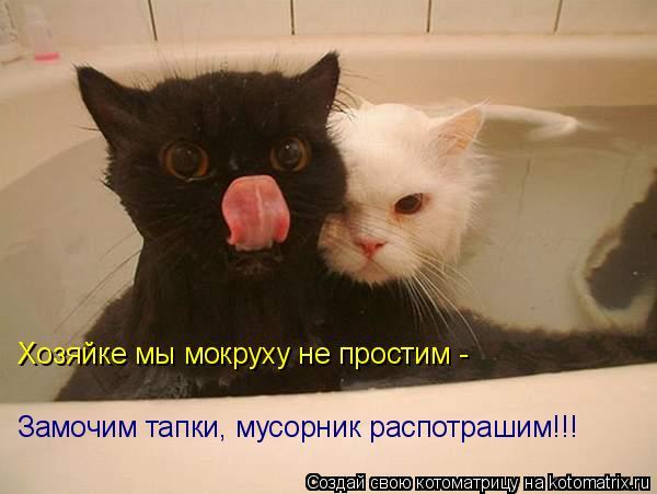 Котоматрица: Хозяйке мы мокруху не простим - Замочим тапки, мусорник распотрашим!!!