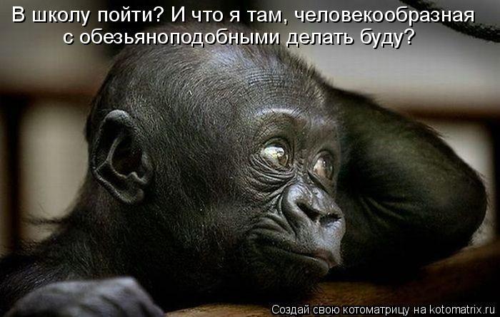 Котоматрица: В школу пойти? И что я там, человекообразная с обезьяноподобными делать буду?