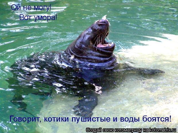 Котоматрица: Ой не могу!  Вот умора! Говорит, котики пушистые и воды боятся!
