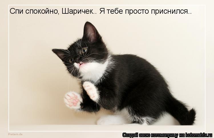 Котоматрица: Спи спокойно, Шаричек.. Я тебе просто приснился..
