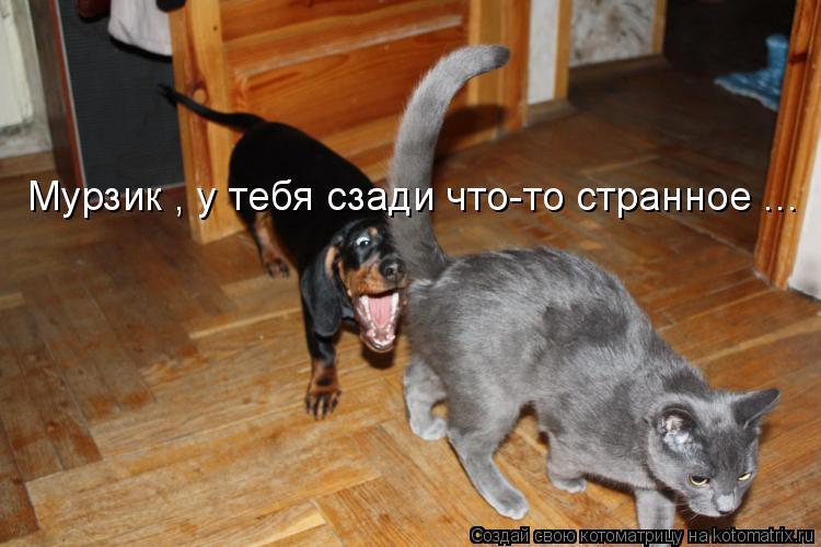 kak-masturbirovat-devushke-podushka