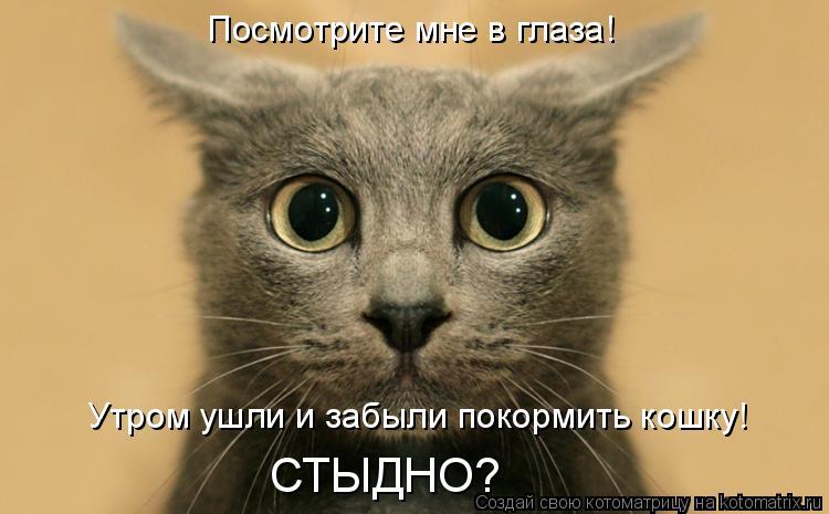 Котоматрица: Посмотрите мне в глаза! Утром ушли и забыли покормить кошку! СТЫДНО?