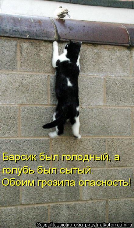 Котоматрица: Барсик был голодный, а  голубь был сытый. Обоим грозила опасность!
