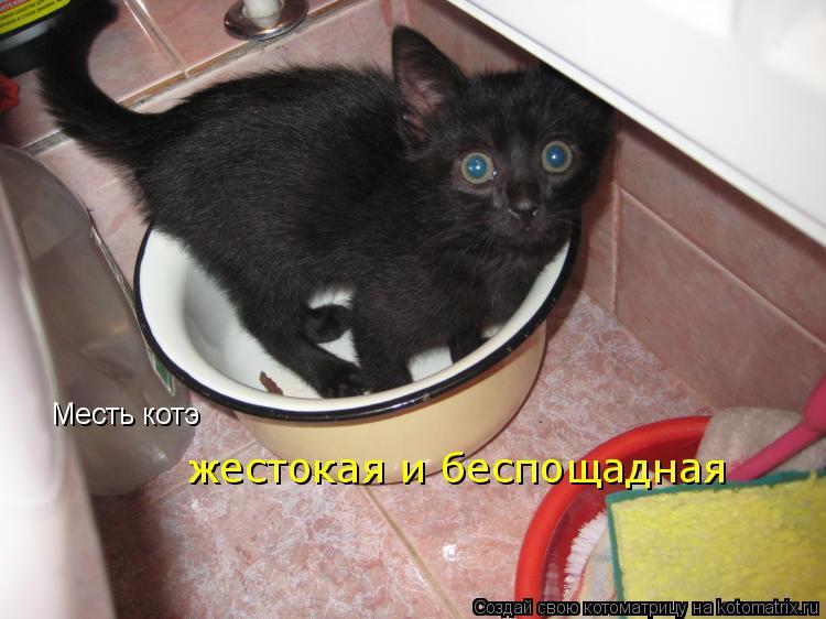 Самий малинкий киска фото 4 фотография