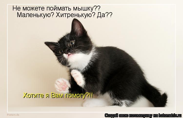 Котоматрица: Не можете поймать мышку??  Маленькую? Хитренькую? Да?? Хотите я Вам помогу?!!