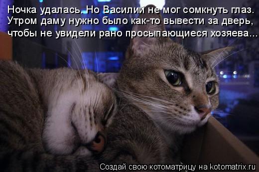 Котоматрица: Ночка удалась. Но Василий не мог сомкнуть глаз. Утром даму нужно было как-то вывести за дверь, чтобы не увидели рано просыпающиеся хозяева...